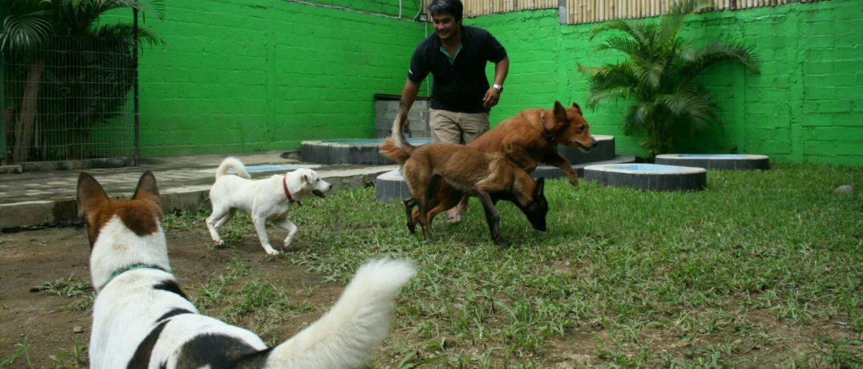 Bamboo Dog Hotel Fun Friendly And Safe Pet Boarding In Bali